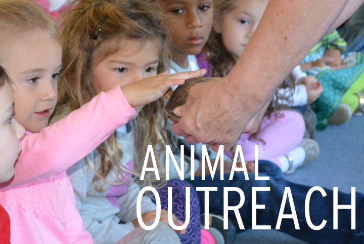 Virtual Animal Outreach